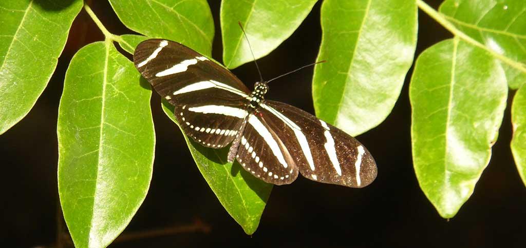 keys_butterfly.jpg